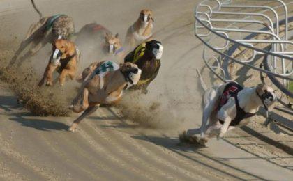 как ставить ставки на собачьи бега